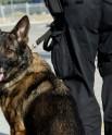 Police Dog K9
