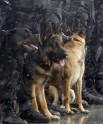Drug Dogs